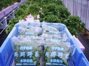 365日新鮮野菜