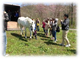 馬を核にした滞在型ホースアシステッドセラピーサービス事業